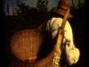 juan_bautista_cosecha-6.png